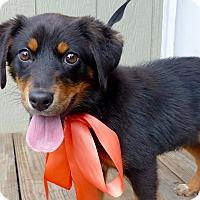 Adopt A Pet :: Leslie - Baton Rouge, LA