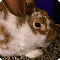 Adopt A Pet :: Petco - Ogden, UT