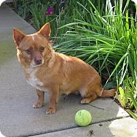 Adopt A Pet :: Rosie - Tracy, CA