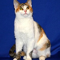 Adopt A Pet :: Princess DragonFly - Tracy, CA