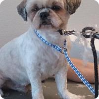 Adopt A Pet :: Shaggy - Manhattan Beach, CA