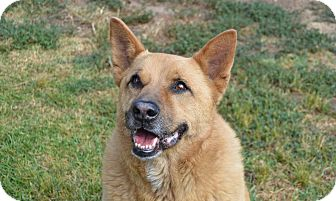 Shepherd (Unknown Type) Mix Dog for adoption in Santa Barbara, California - DJ