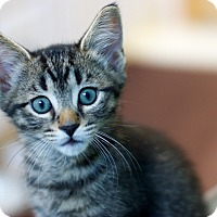 Adopt A Pet :: Porthos - Troy, MI