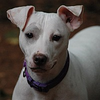 Adopt A Pet :: Gracie - Lawrenceville, GA