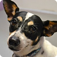 Adopt A Pet :: Roxanne - Virginia Beach, VA
