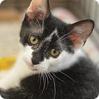 Adopt A Pet :: Lizzy - Madison, NJ