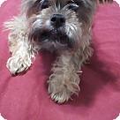 Adopt A Pet :: Chewie