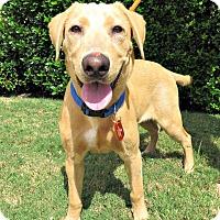 Adopt A Pet :: Tucker - McKinney, TX
