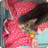 Adopt A Pet :: Amalaya - Mansfield, TX