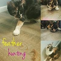 Adopt A Pet :: Clio - Phoenix, AZ