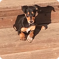 Adopt A Pet :: Grace - Concord, CA