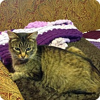 Adopt A Pet :: Mamie - Eureka, CA