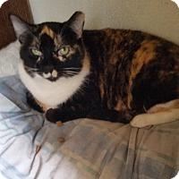 Adopt A Pet :: Katarina Mai Tai - Phoenix, AZ