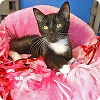 Adopt A Pet :: Violet - Glendale, AZ