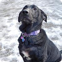Adopt A Pet :: DAPHNE - Millerstown, PA