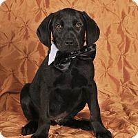 Adopt A Pet :: Nate - Colmar, PA