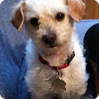 Adopt A Pet :: Freddie - Battle Ground, WA