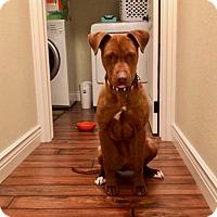 Adopt A Pet :: Penny - Manhattan, KS