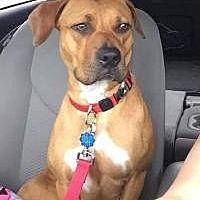 Adopt A Pet :: Trinity***Hold*** - New Smyrna Beach, FL