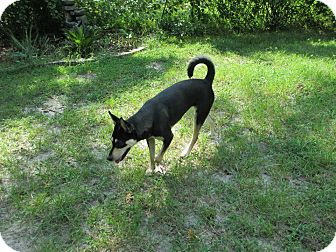Carolina Dog Mix Dog for adoption in Cranston, Rhode Island - Zoey (located in GA)