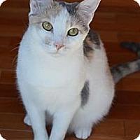 Adopt A Pet :: Miss Piggy - Merrifield, VA