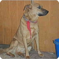 Adopt A Pet :: Sonja - Anton, TX