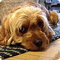 Adopt A Pet :: Ollie - Carey, OH