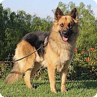 Adopt A Pet :: Clancey - Laguna Niguel, CA