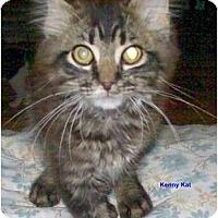 Adopt A Pet :: Kenny Kat - McMinnville, TN
