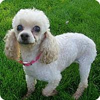 Adopt A Pet :: Rosie in Ogden Utah - Dover, MA