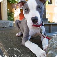 Adopt A Pet :: Stuey - San Francisco, CA