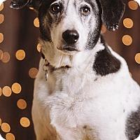 Adopt A Pet :: Champ - Portland, OR