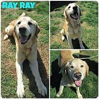 Adopt A Pet :: Ray - Carmichael, CA