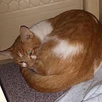 Adopt A Pet :: Sketch - Lima, OH