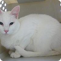 Adopt A Pet :: Sylvia (Cocoa Center) - Cocoa, FL