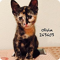 Adopt A Pet :: OLIVIA - Conroe, TX