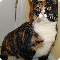 Adopt A Pet :: Victortia - Chattanooga, TN