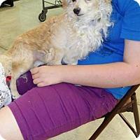 Adopt A Pet :: Donny - Orlando, FL