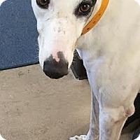Adopt A Pet :: Phantom - West Palm Beach, FL