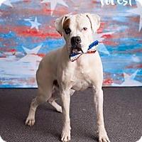 Adopt A Pet :: Forest - Scottsdale, AZ