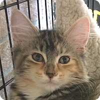 Adopt A Pet :: Rosalee - Winchester, CA