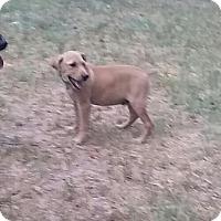Adopt A Pet :: Flint - Aurora, CO