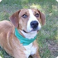 Adopt A Pet :: PeeDee - Mocksville, NC