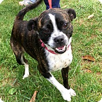 Adopt A Pet :: Gypsy - WESTMINSTER, MD