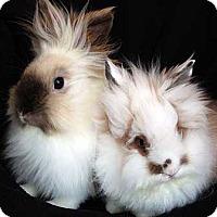 Adopt A Pet :: Junebug - Tustin, CA