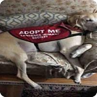 Adopt A Pet :: CLIFFORD - Lawrence, KS