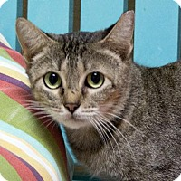 Adopt A Pet :: Melba - Rockport, TX