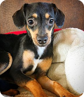 Terrier (Unknown Type, Small) Mix Dog for adoption in Fredericksburg, Texas - Watson