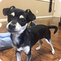 Adopt A Pet :: Trinie - Dublin, CA
