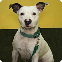 Adopt A Pet :: Macy - Bradenton, FL